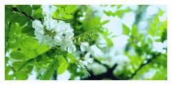 圣泉公园-花卉特写-荣耀20PRO-M